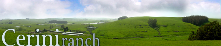 top graphic of ranch view