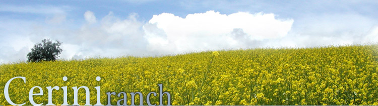 top graphic of mustard field