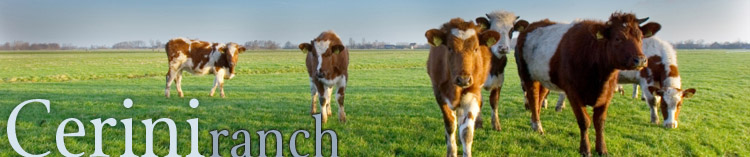 top graphic of cattle in field